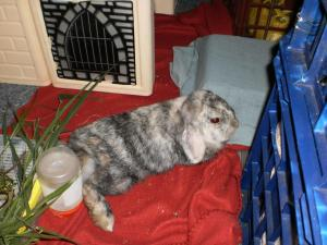 Ananda the bunny