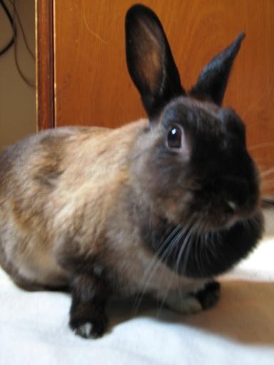 Bunny - April 2008