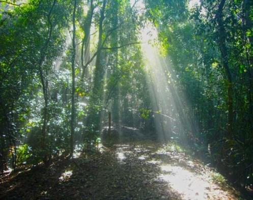 Udawattakele forest